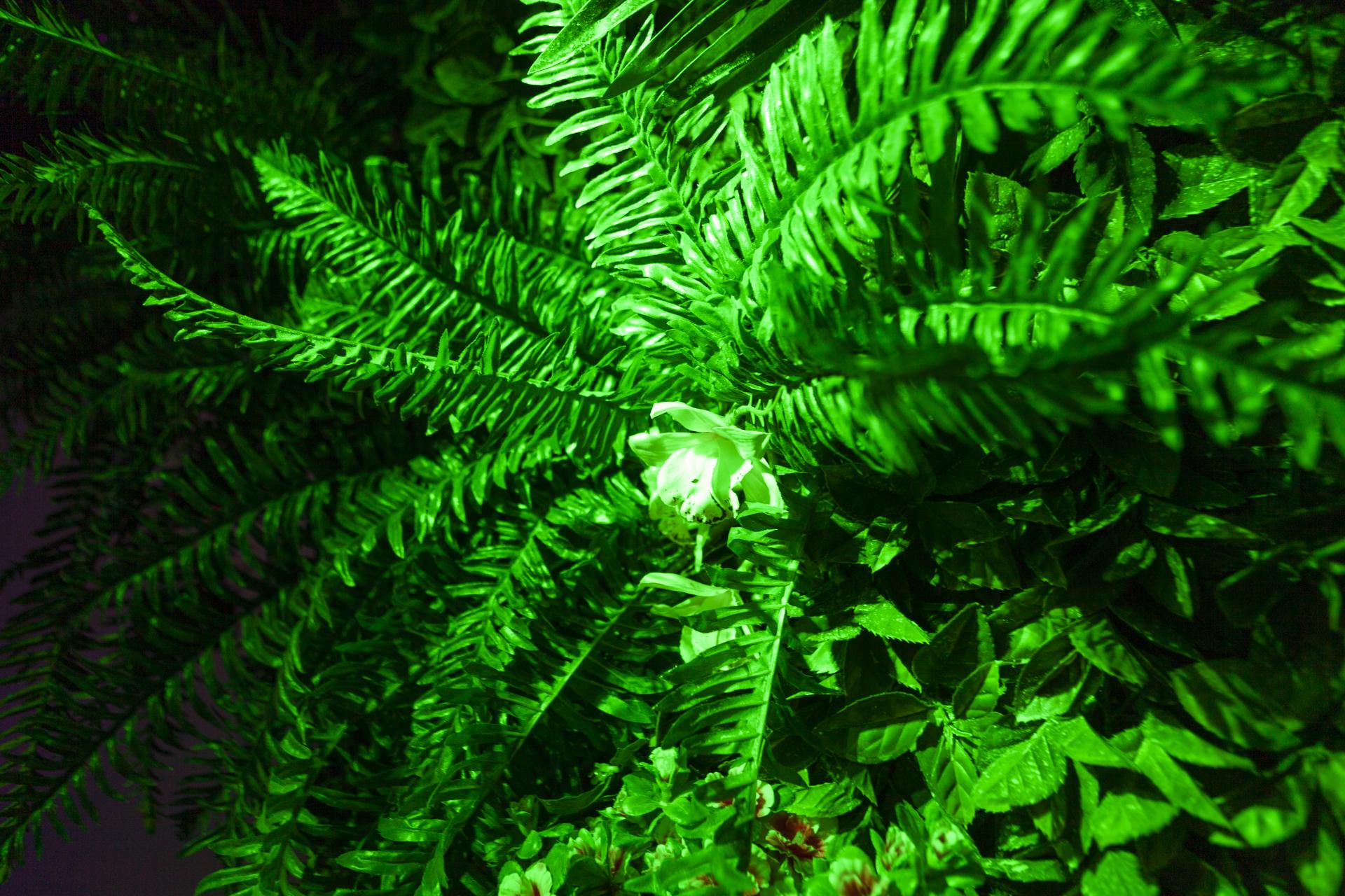 Green Club Guide (c) Marcus Bläsing/clubliebe e.V.